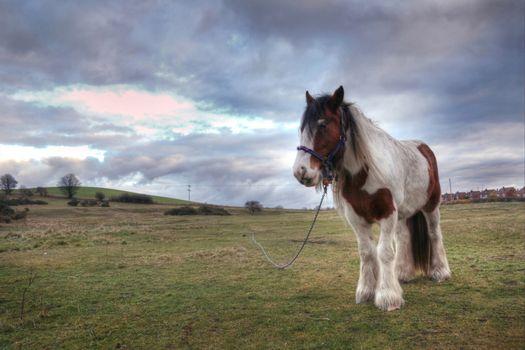 Animals. Horse graze on green field
