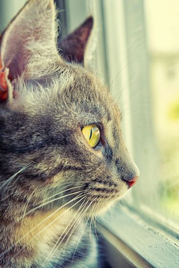 Tabby cat looks outside from the window