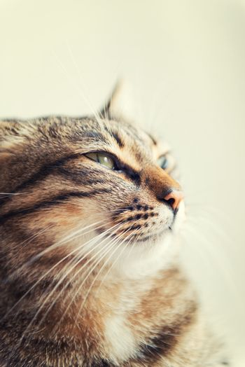 Tabby cat relaxed