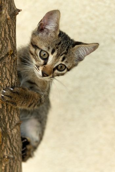 little puppy cat climb on the plant