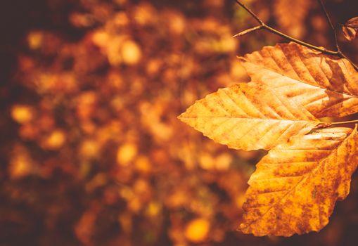 Fall Foliage Photo Background. Golden Leaves Autumn Backdrop.