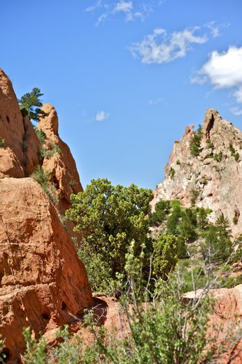 Summer in Colorado. Garden of the Gods. Summer in the Rockies. Vertical Photo. Nature Photo Collection.