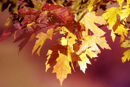 Autumn Background - Fall in the Forest. Yellowish Leafs Close-Up. Horizontal Photography.