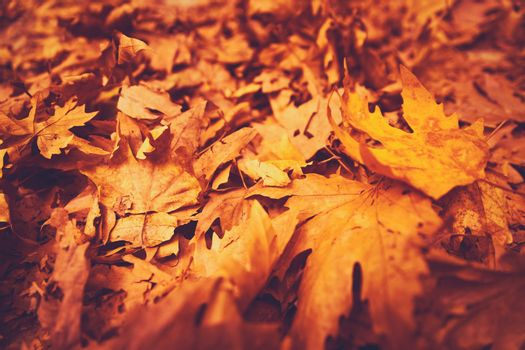 Autumn leaves background, dry orange maple foliage on the ground in the park, textured natural wallpaper, beautiful fall nature