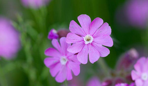 Flower in the summer - Fresh colours in the garden