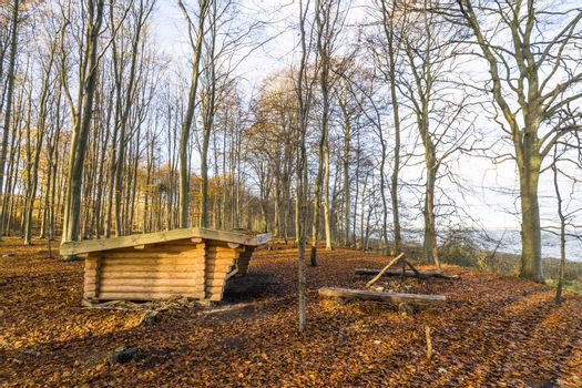 Shelter in the outdoors in a forest with tall trees in the autumn