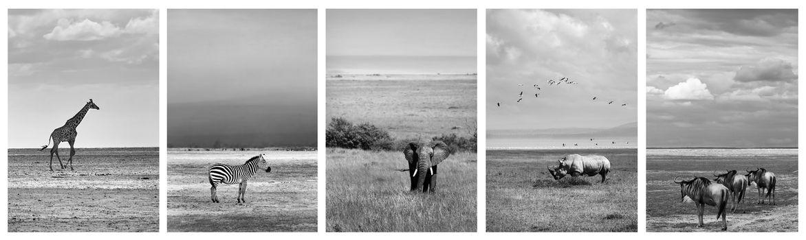 Black and white collage of wildlife photos, safari pictures of a giraffe, zebra, elephant, rhino and wildebeest, adventure travel to Africa, Kenya