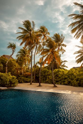 Beautiful landscape of a luxury beach, tall fresh palm trees around clear blue refreshing water of the pool, summer holidays on exotic island, Maldives