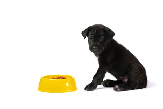 Cute small dog with bowl of dog food isolated on white background. Pets is feeding concept.