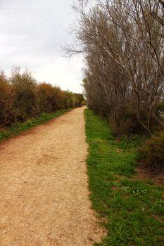 Path between vegetation in Santa Pola, Spain