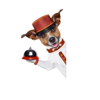 jack russell bellboy dog behind a blank and empty banner or placard at hotel, where pets are welcome and allowed,isolated on white background