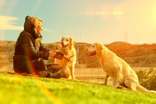 Woman and dogs playing in the park.Companion pets concept