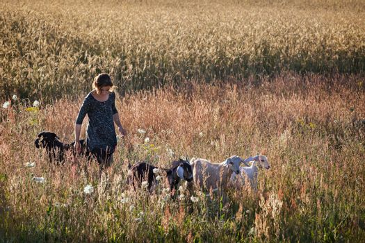 Shepherd with her goats, and her dog in meadow