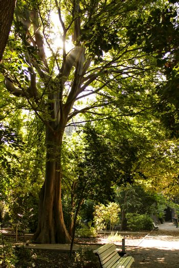 Majestic trees in the garden under the sun in Spain